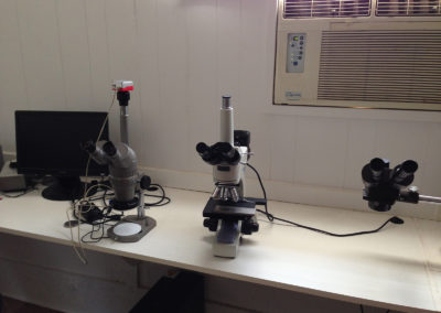 Digital-Stereoscope-and-Microscope